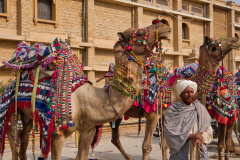 Camel-with-trainer copy