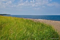 Beach grass copy