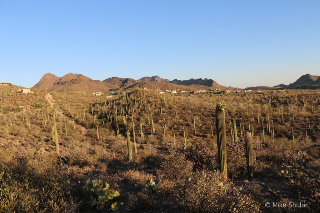 View of Sonoran Desert from Blue Agave B&B