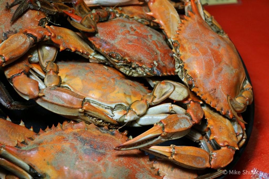 Fresh Louisiana Crab