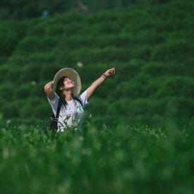 The Essence of Tea in Hangzhou