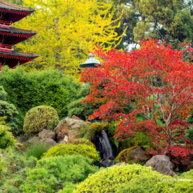 Japanese Tea Garden: Tranquility, beauty and harmony in the heart of San Francisco