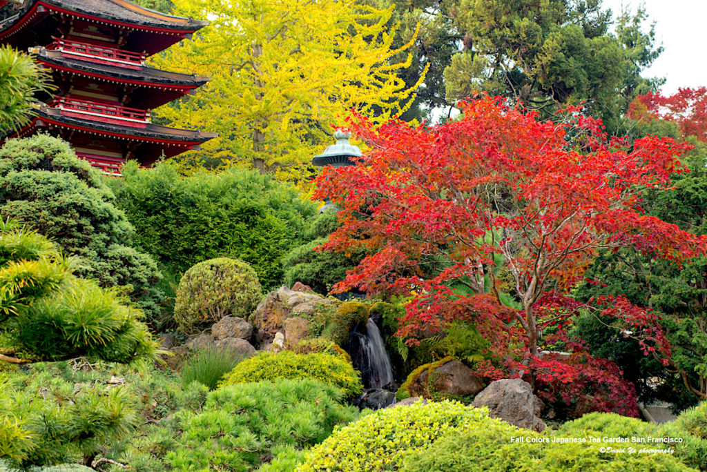 japanese tea garden Photo by: David Yu https://www.flickr.com/photos/davidyuweb/