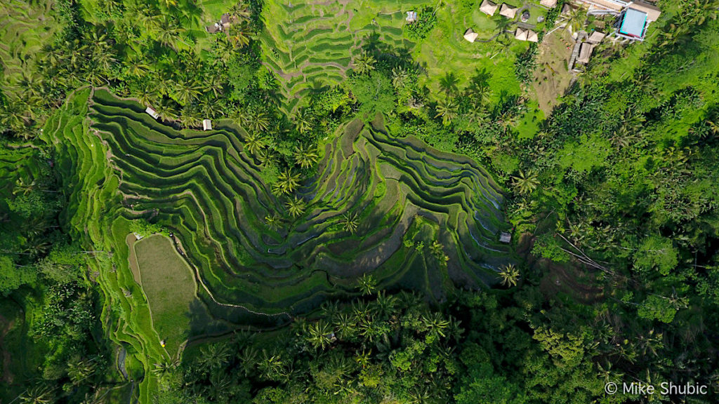 Bali Rice Terraces in Ubud - aerial photo by MikesRoadTrip.com