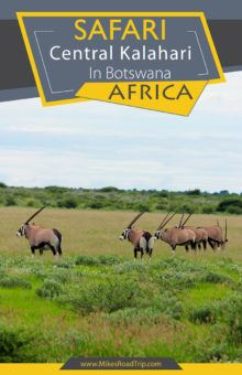 Central Kalahari Safari Pinterest Pin by MikesRoadTrip.com