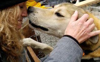Love from Ididaride dog in Seward AK